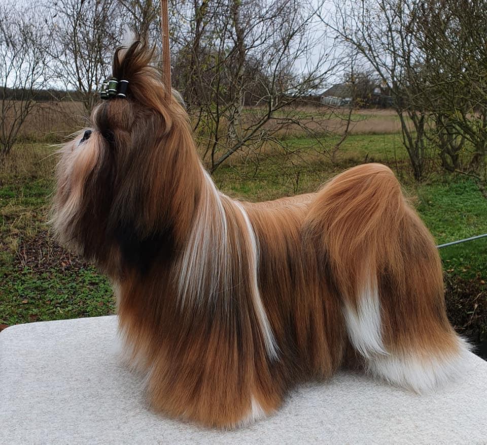 Mine hunde 39